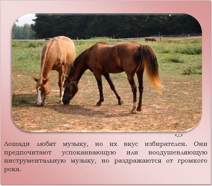 Лошади - прекрасные создания природы: что о них следует знать - досуг - животные на joinfo.ua