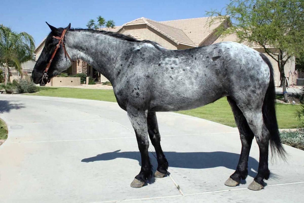 Изабелловая масть лошади: история, внешний вид | мои лошадки