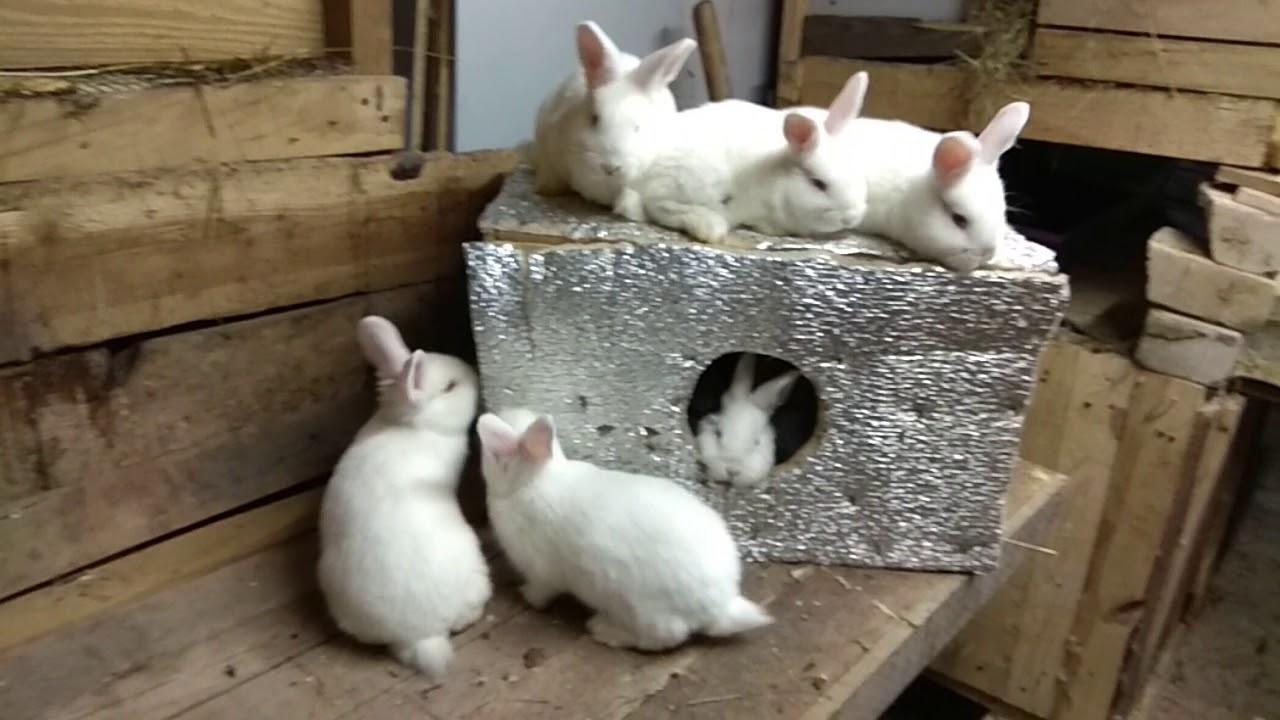 Когда отсаживать крольчат от крольчихи: основные правила