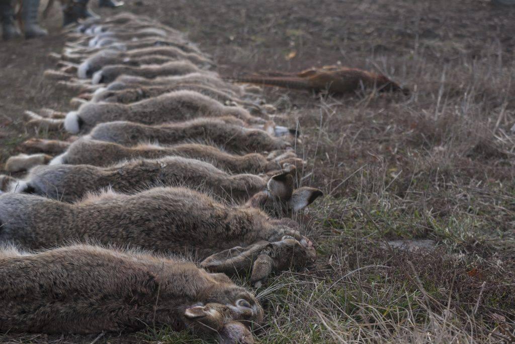 Дохнут кролики и крольчата: причины смертности и способы решения проблемы