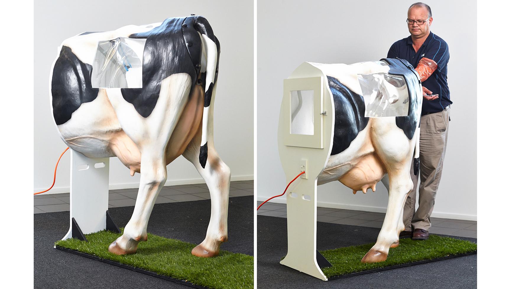 Искусственное осеменение коров в домашних условиях