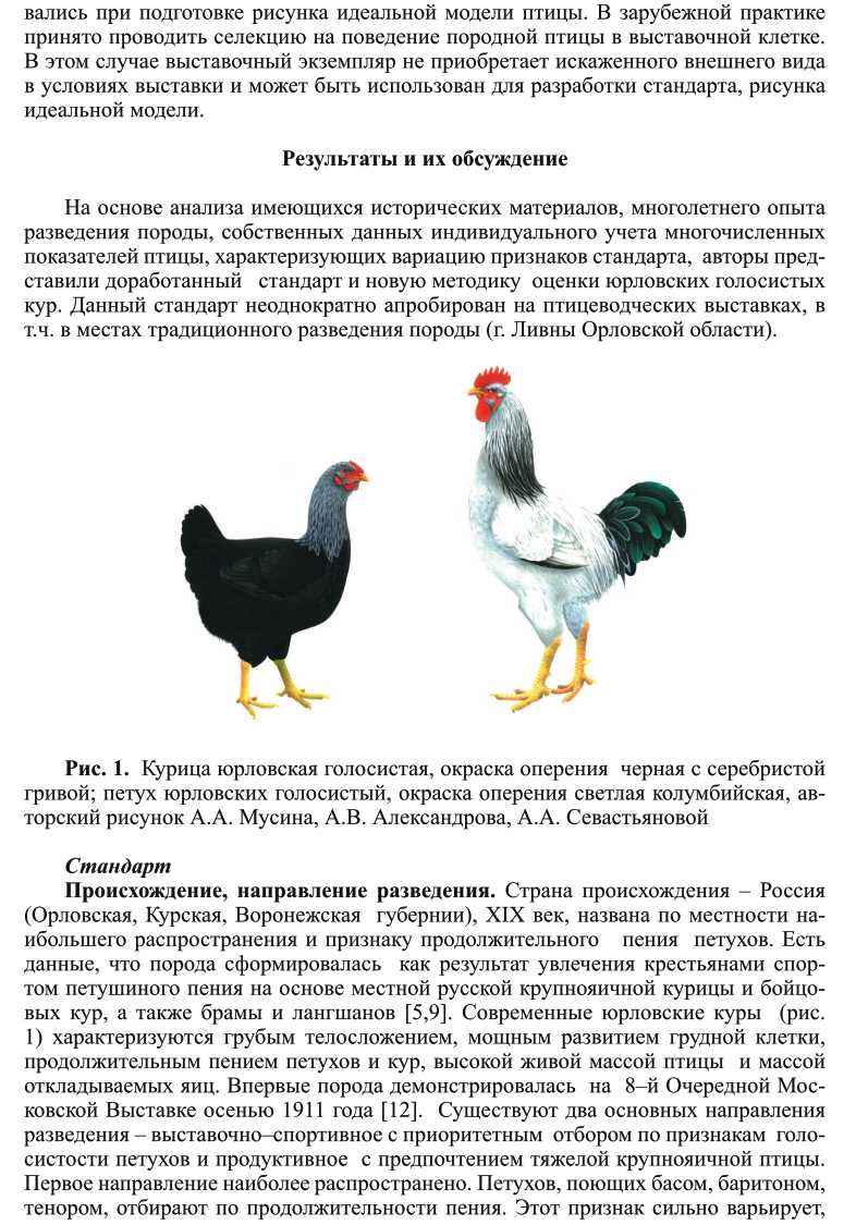 Юрловские куры и голосистые петухи: от характеристики до нюансов размножения