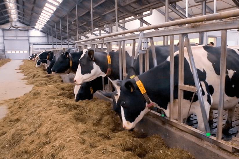 Как построить мини-ферму своими руками
