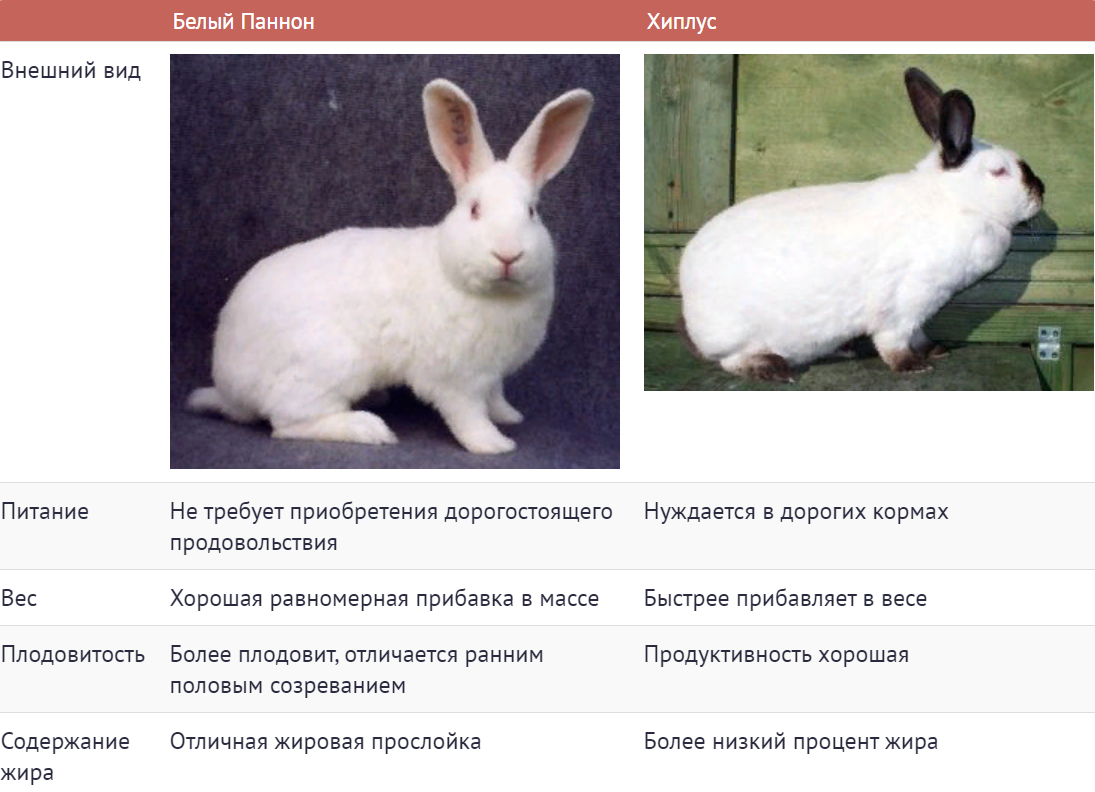 Белый паннон: как содержать кроликов и чем они примечательны?