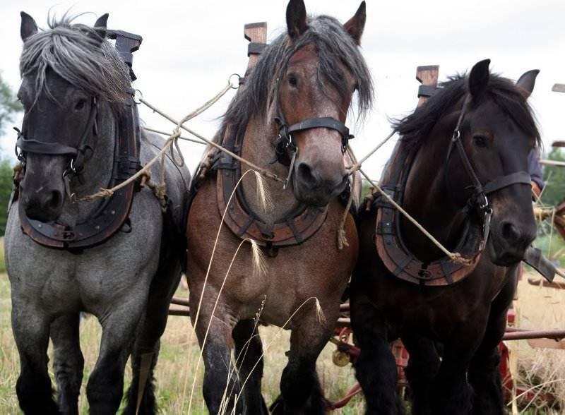 Сколько в среднем весит лошадь: определение веса