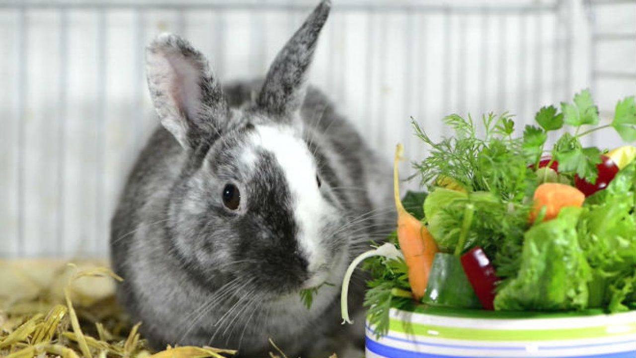 Как и зачем кормить кроликов лопухами?