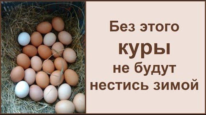 Почему курица несет яйца без скорлупы? ⋆ все про кур