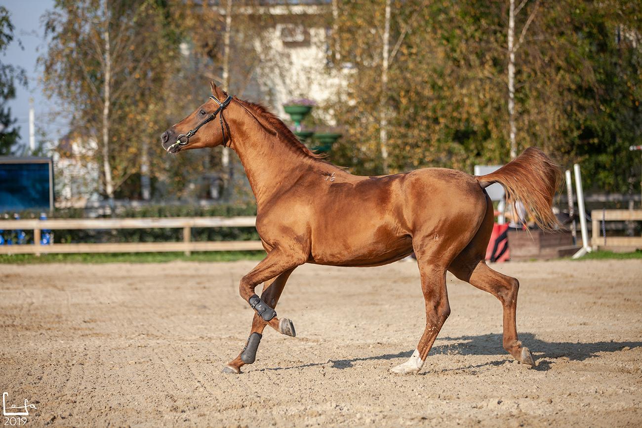 Все о донской лошади: обзор породы, описание и характеристика с фото и видео