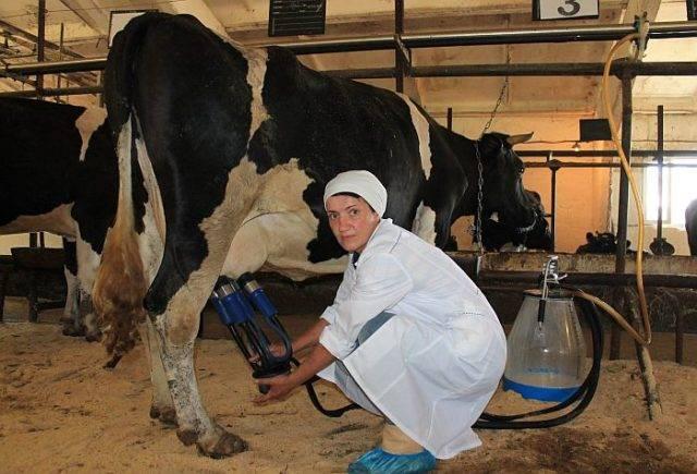 ✅ о спаривании коровы и быка (схема синхронизации коров, применение эстрофана) - tehnomir32.ru