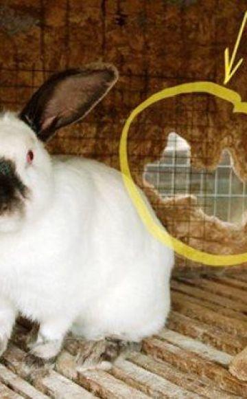 Как провести дезинфекцию клетки кроликов
