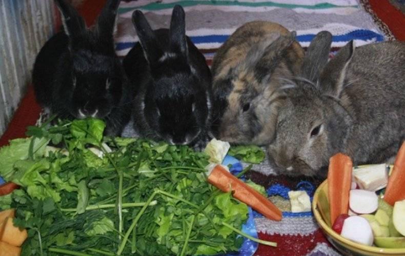 Можно ли кроликам давать огурцы, кабачки, тыкву