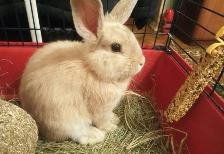 Чем нельзя кормить кроликов, а что можно добавлять в пищу