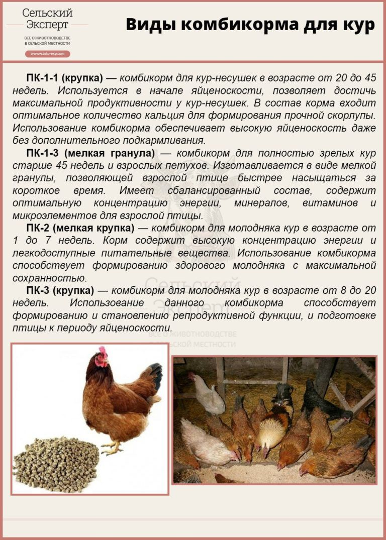 Сколько растет курица