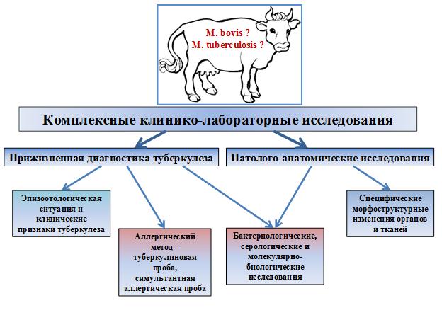 Болезни коров и их симптомы: описание и лечение основных заболеваний крс