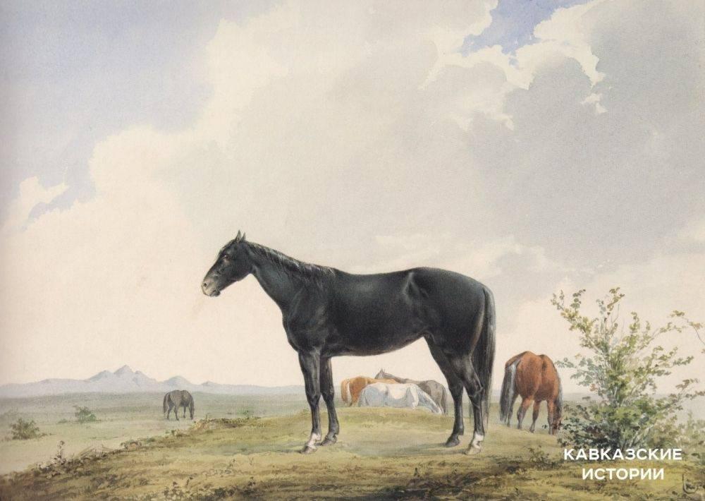 Лошадь кабардинской породы: кабардинский конь один из самых старейших в мире |