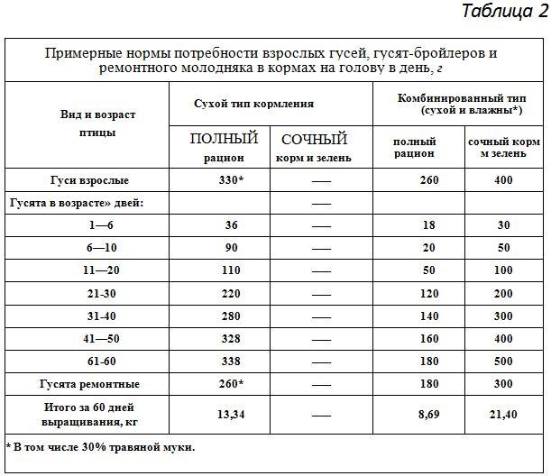 Кормление гусят | fermer.ru - фермер.ру - главный фермерский портал - все о бизнесе в сельском хозяйстве. форум фермеров.