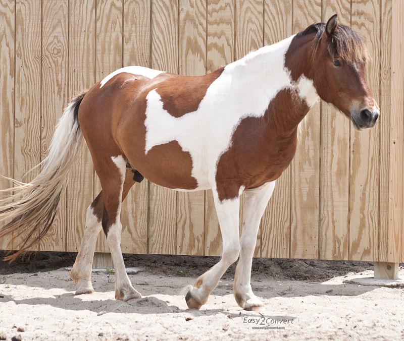 Масти лошадей: описание и названия, список основных окрасов и оттенков