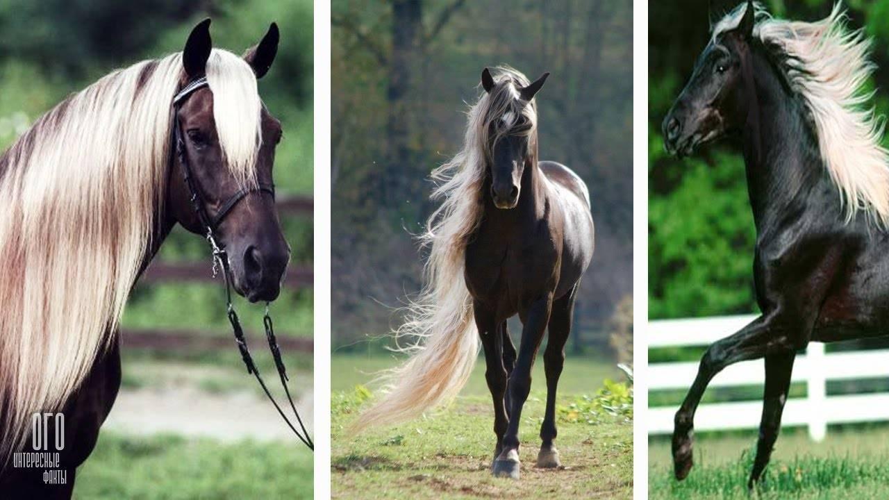 My little pony мой маленький пони: дружба – это чудо обои, картинки, скачать 71 обои на рабочий стол. красивые бесплатные фото мультиков для рабочего стола