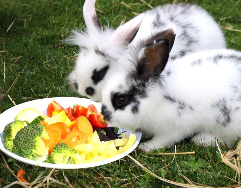 Как быстро и правильно выращивать кроликов