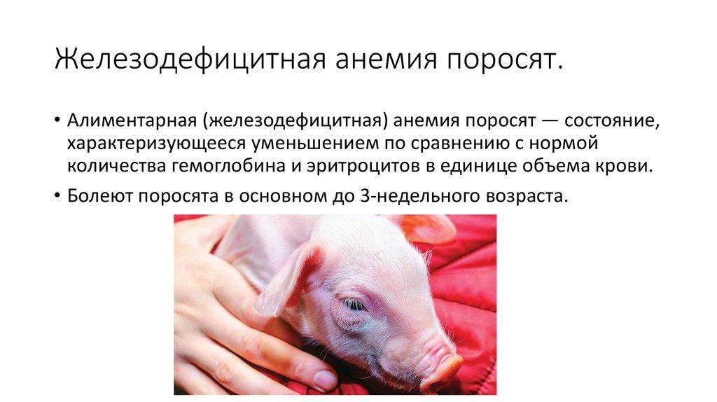 Анемия у свиней -статьи