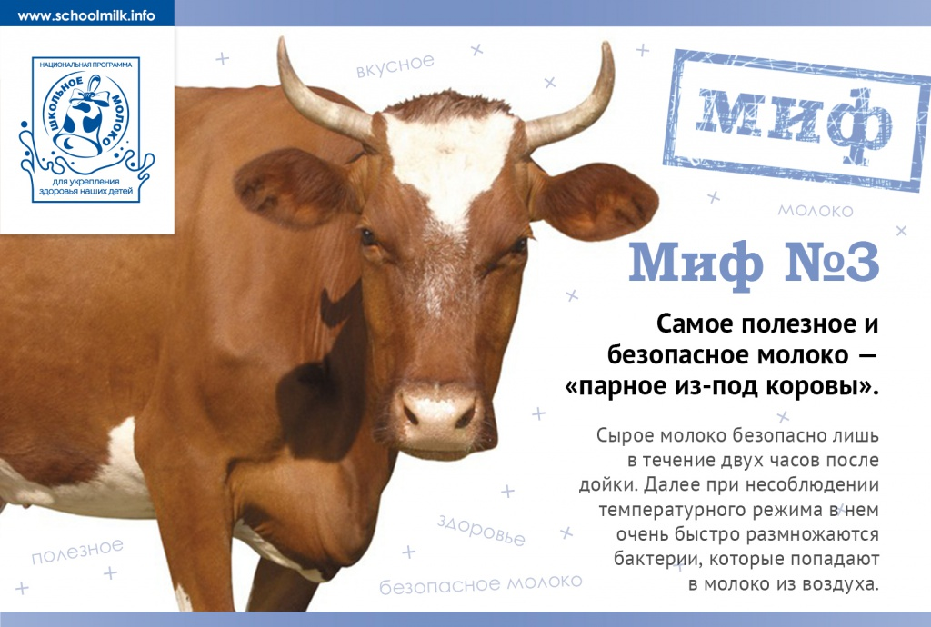 Когда корова дает молоко: почему и откуда берется молоко