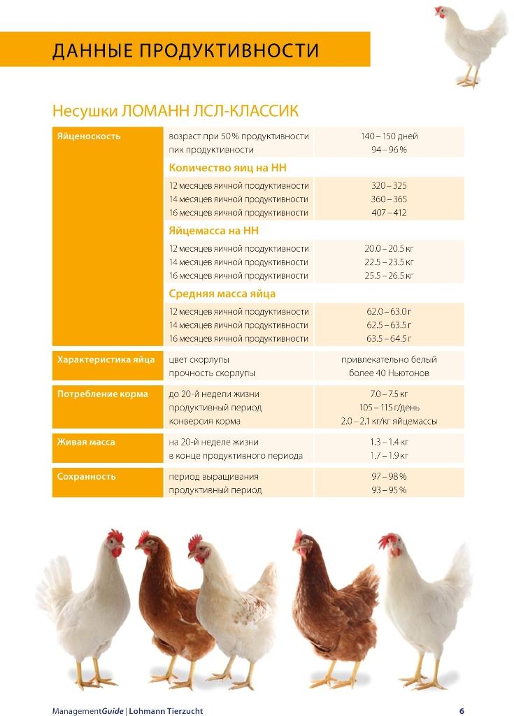 ✅ как правильно выбрать кур несушек, сколько растет курица для мяса - tehnomir32.ru