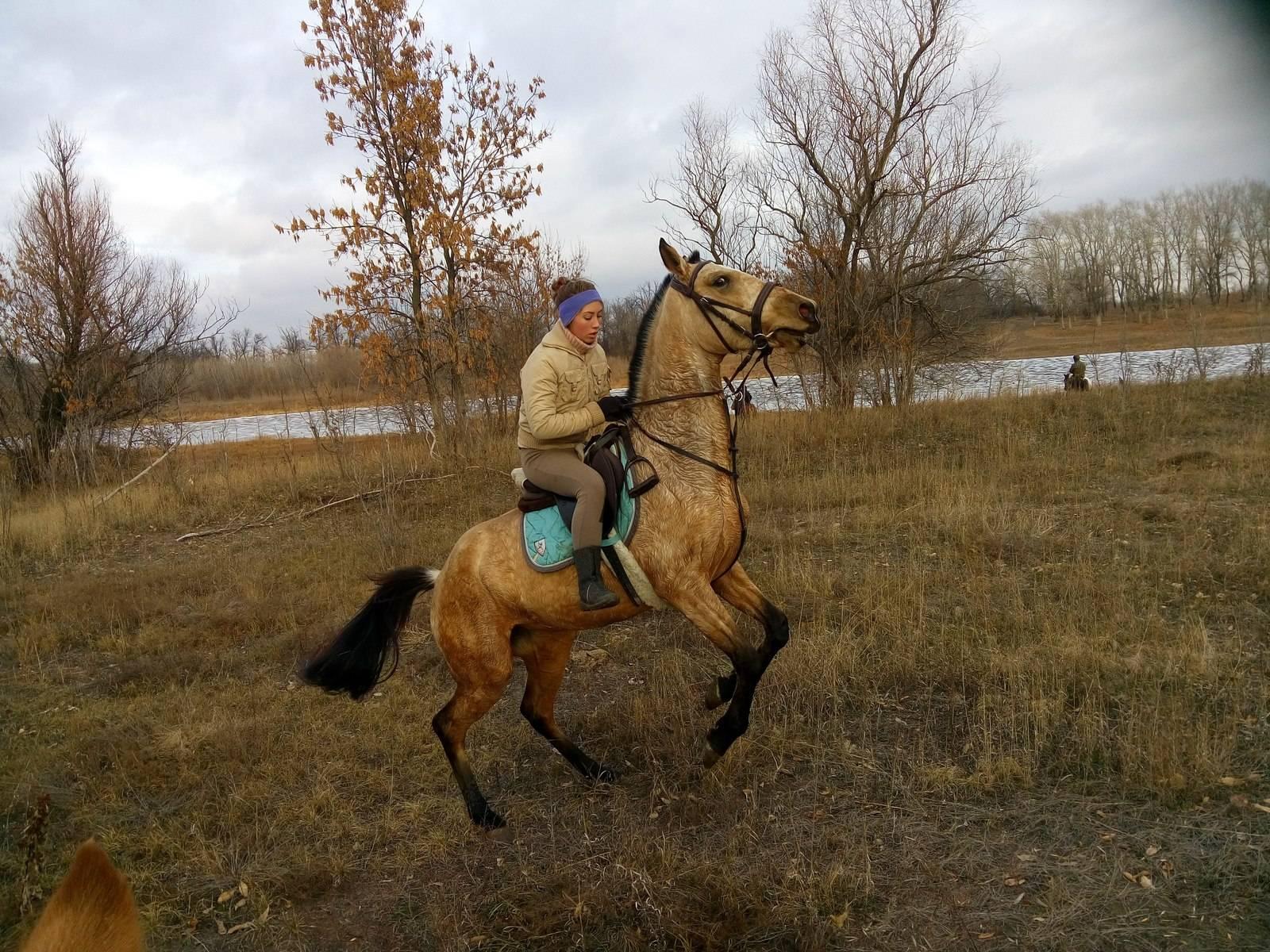 Сонник лошадь встает на дыбы. к чему снится лошадь встает на дыбы видеть во сне - сонник дома солнца