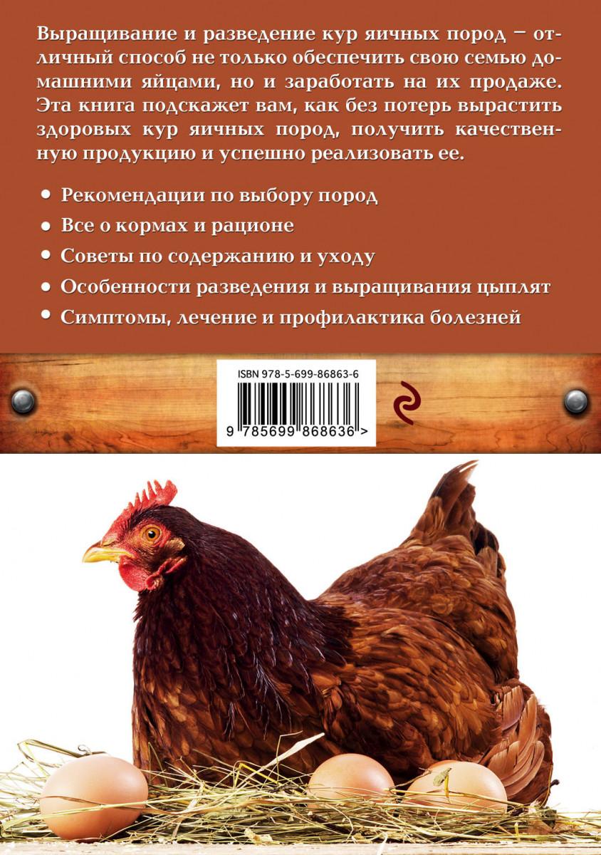 Какие породы кур несут больше всего яиц - самые продуктивные несушки