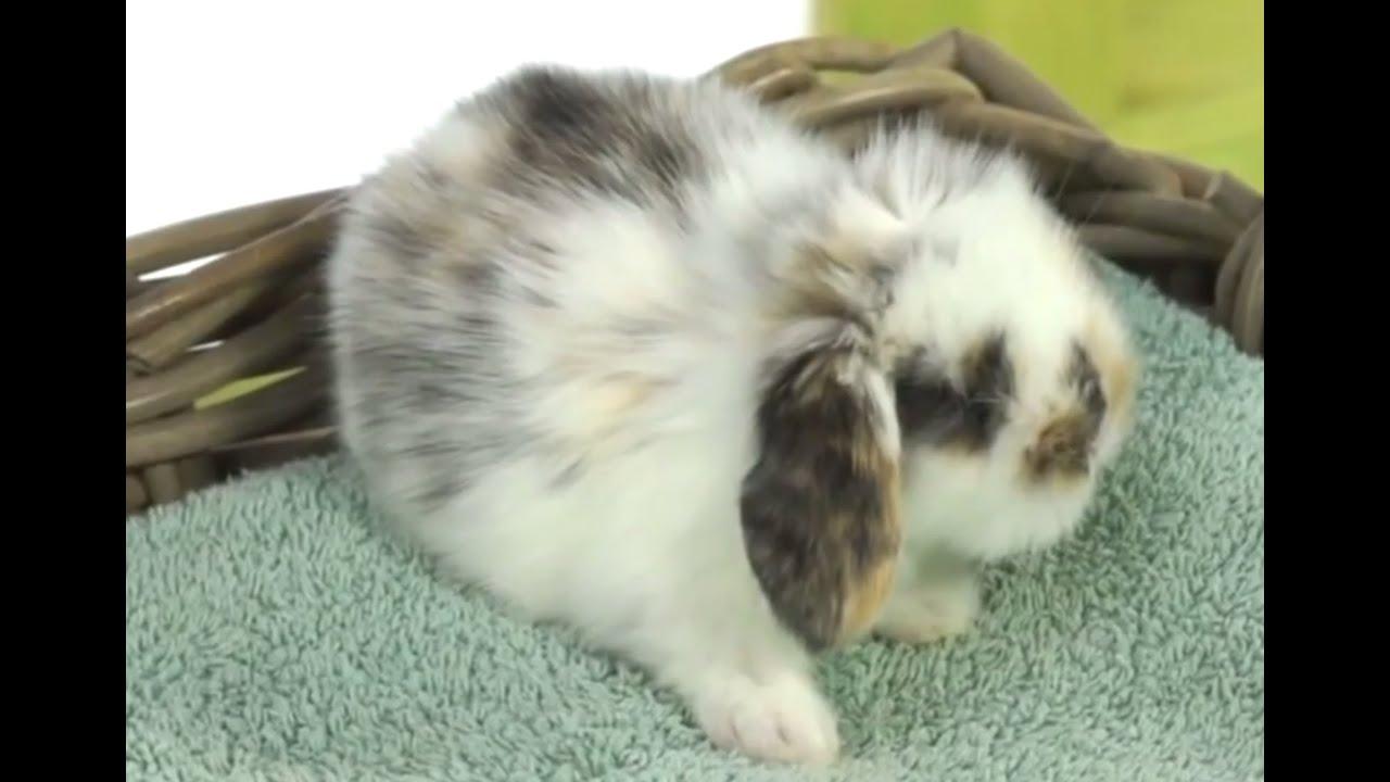 Понос у кроликов: причины и лечение, фото и видео