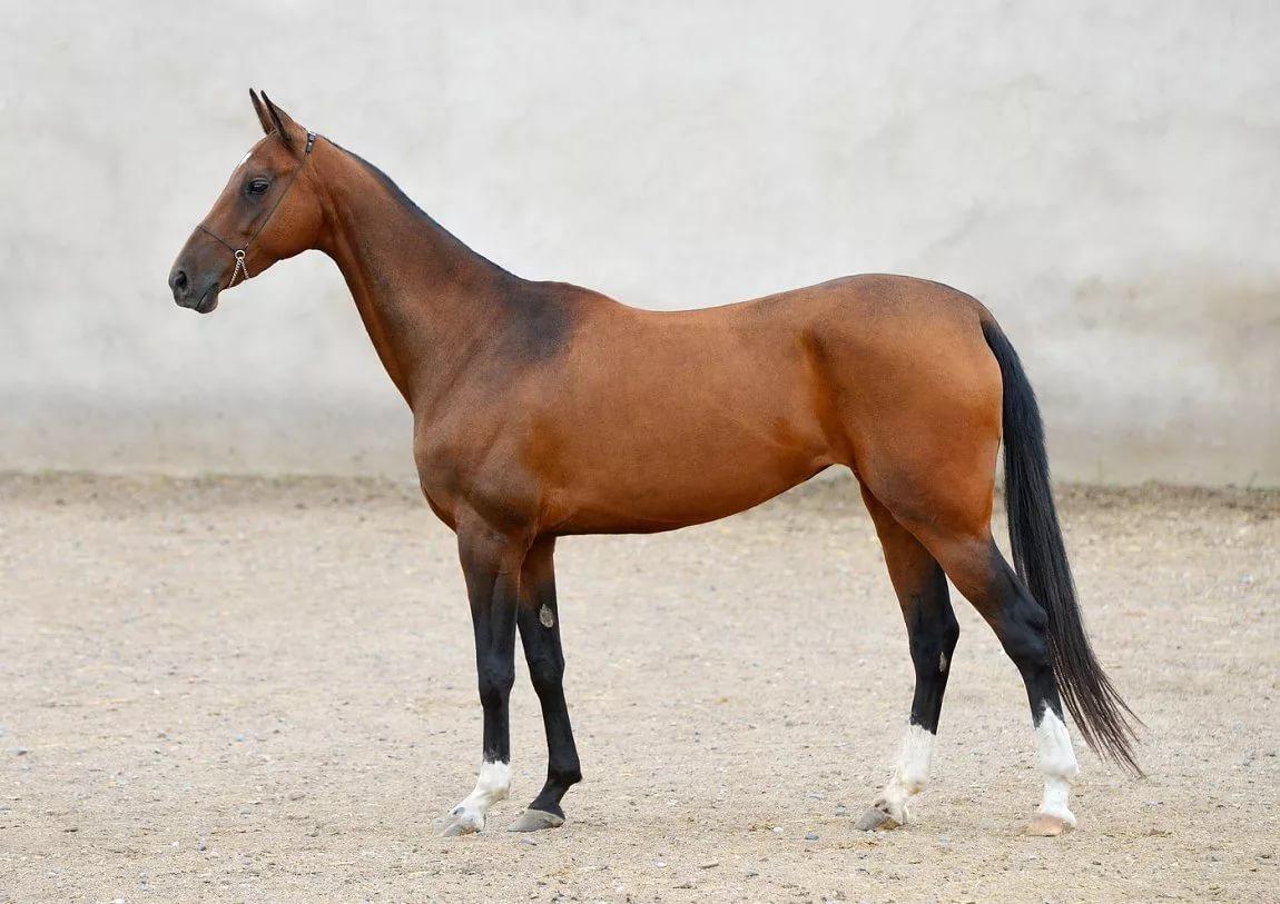 Знакомим вас с лучшими мастями лошадей