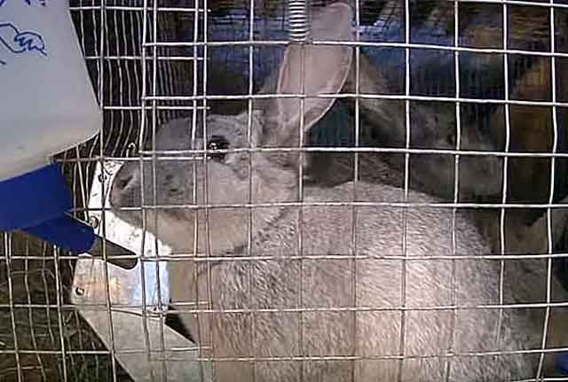 Диарея у декоративного кролика: причины, последствия, профилактика, что делать