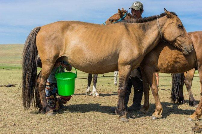✅ молоко лошади как называется - питомник46.рф