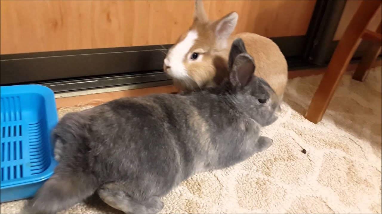 Как приручить декоративного кролика к рукам: основные этапы и важные советы