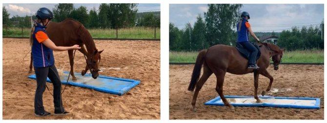 О психологии лошадей: как научить коня доверию и приучить к дрессировке