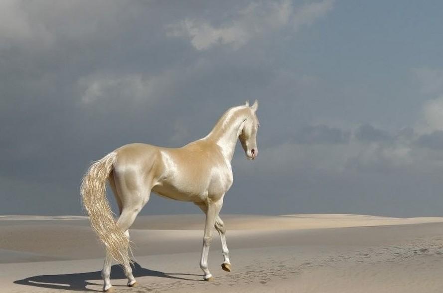 Самые красивые породы лошадей в мире: описание, красивые фото, видео