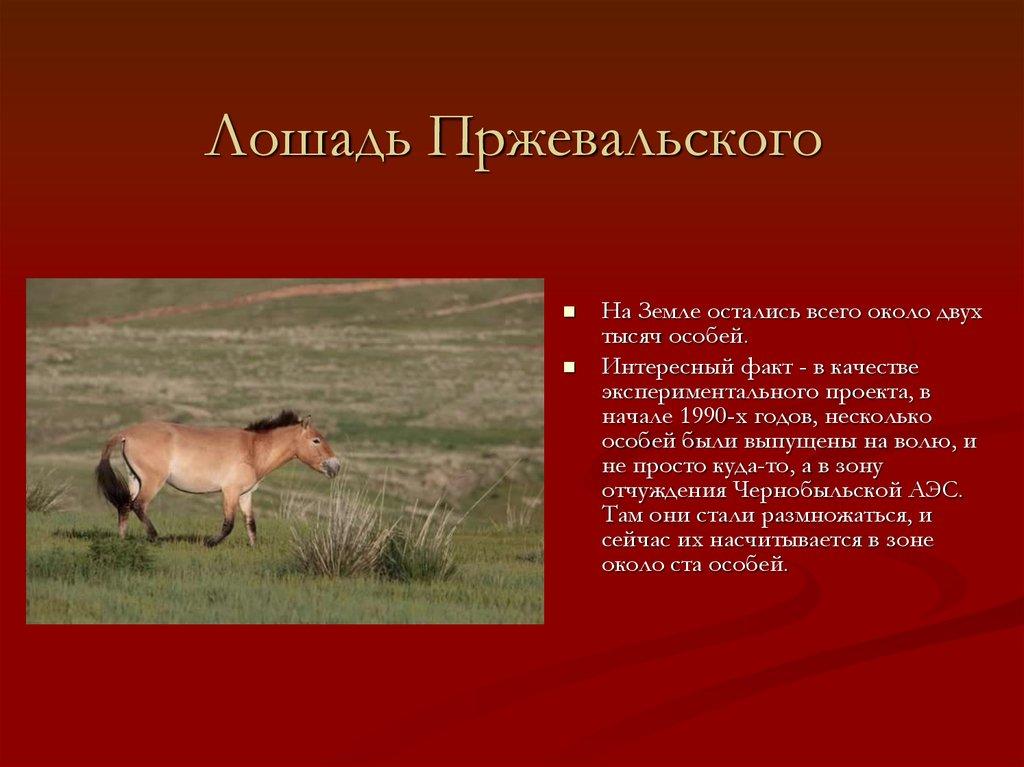 Характеристика дикой лошади пржевальского