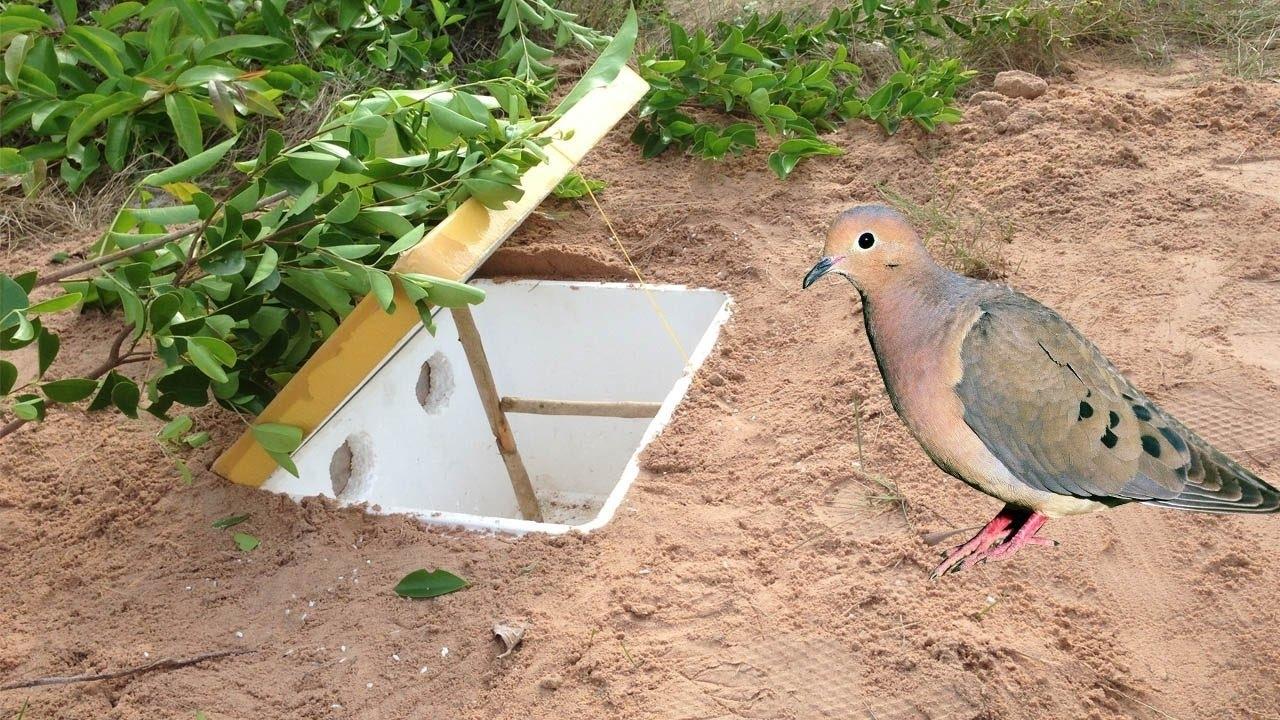 Как можно поймать фазана