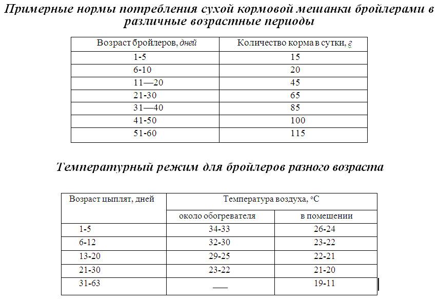 Кормление бройлеров комбикормами: как и сколько нужно кормить, советы и инструкции по кормлению