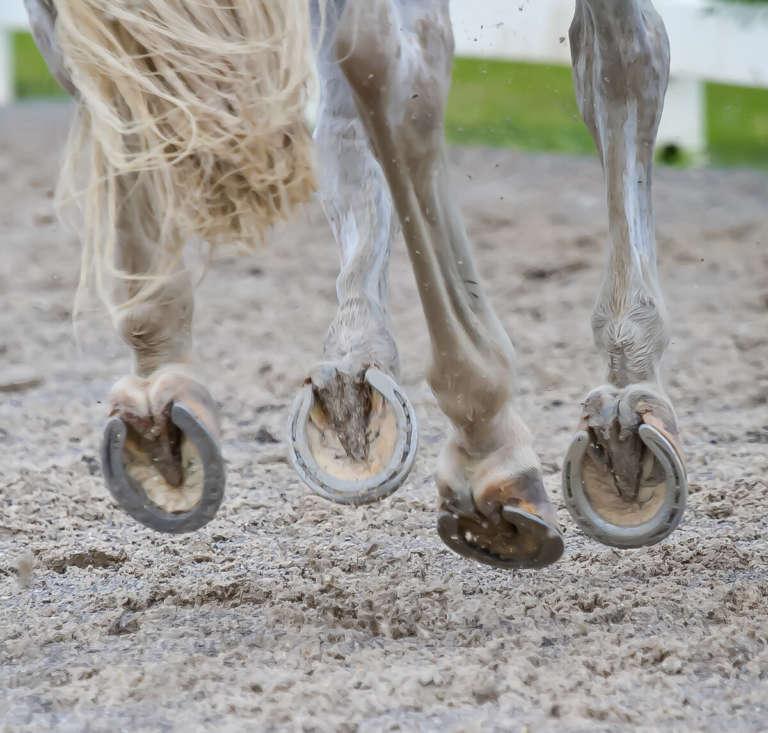 Части тела лошади названия