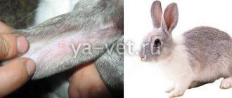Как бороться с глистами у грызунов и кроликов