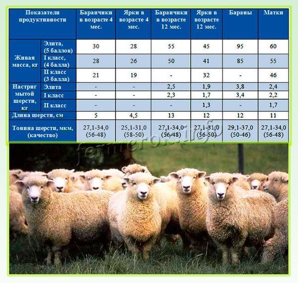 Кормление овец в зимний период