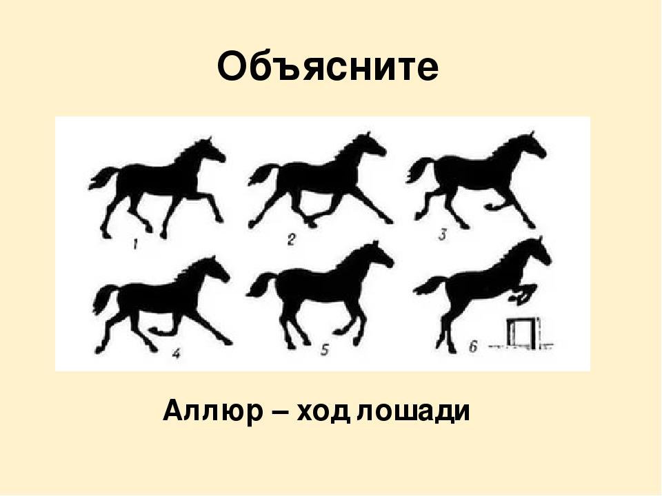 Галоп лошади: виды, средняя скорость, как правильно ездить и остановить лошадь в галопе, фото, видео