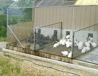 Как разводить кроликов в домашних условиях?