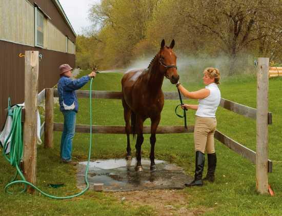 ᐉ содержание и уход за лошадьми в домашних условиях - zooon.ru