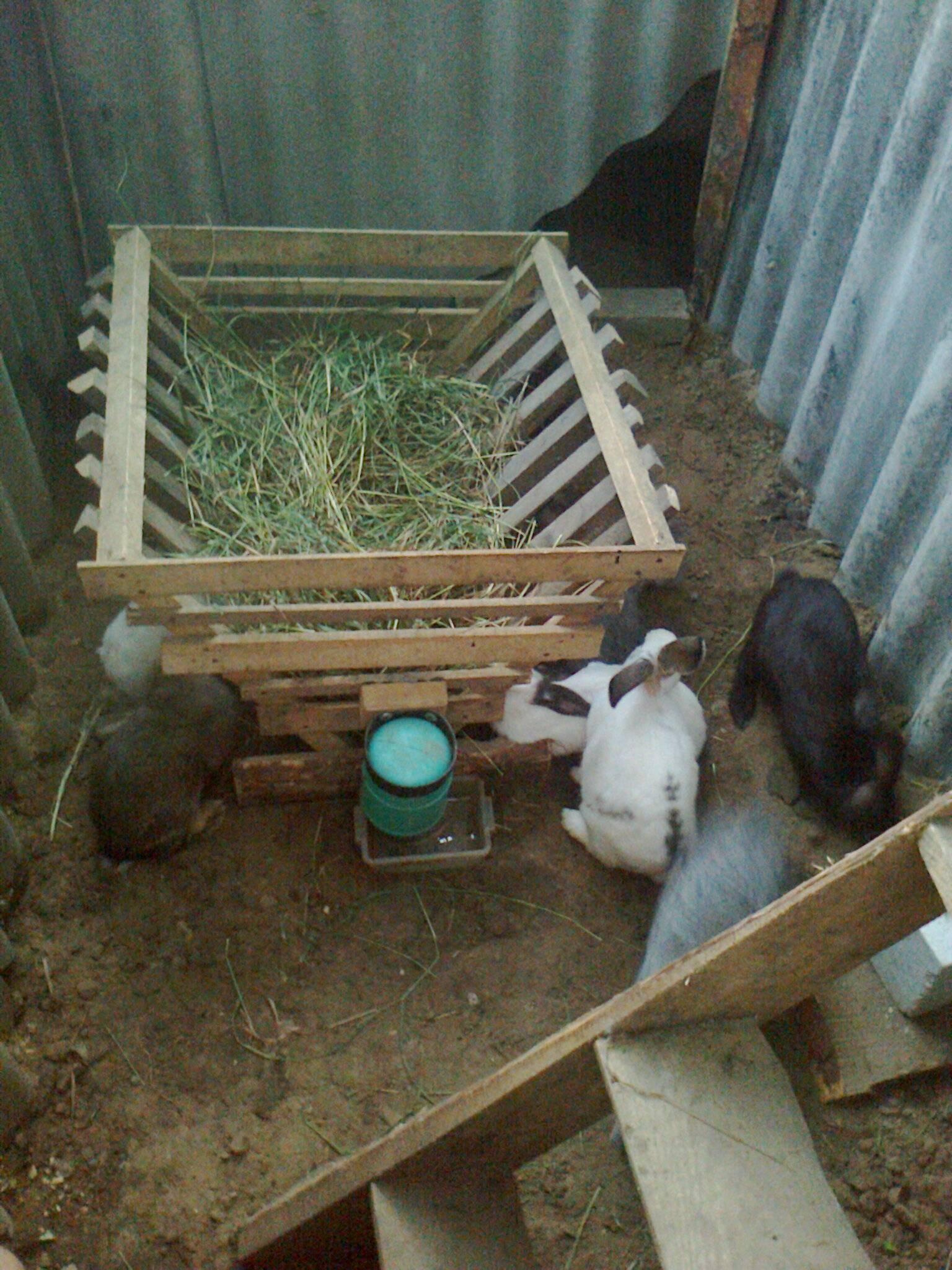 О содержании кроликов: в клетках для начинающих, можно ли совместно с курами
