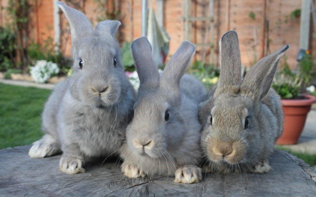 Почему кролики стучат задними лапами ночью | комнатные цветы