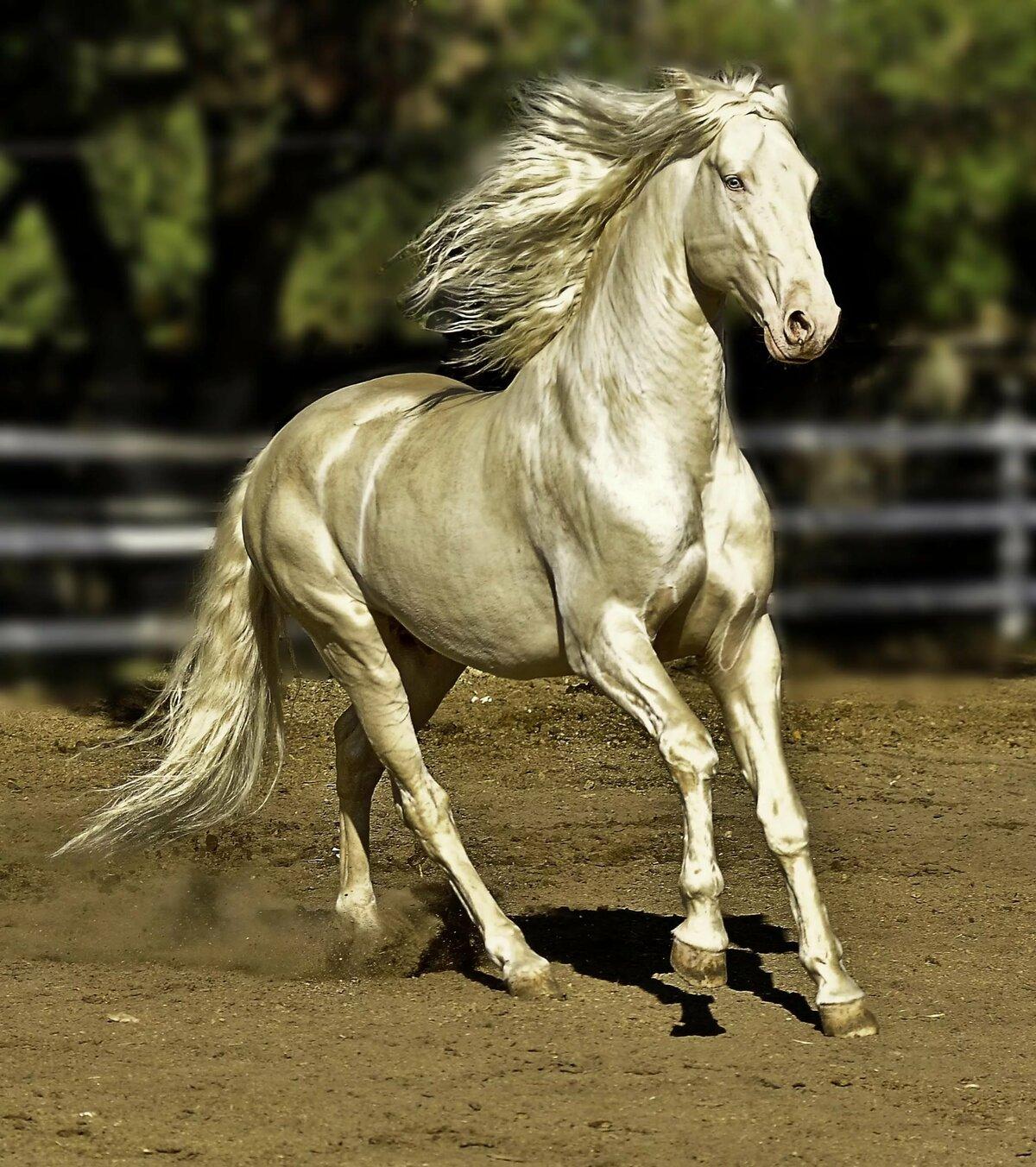 Самые дорогие лошади в мире: цены и имена