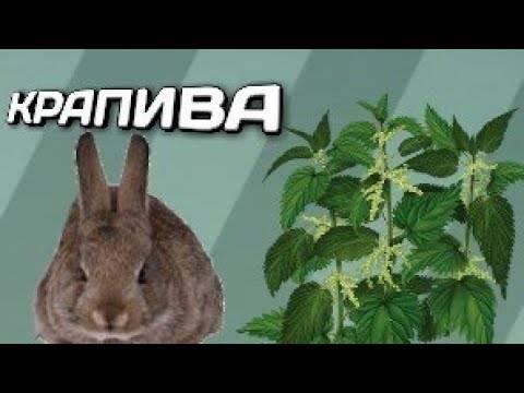 Крапива для кроликов: можно ли давать и как