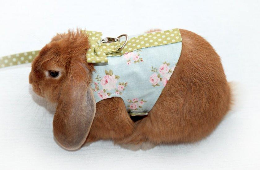 Поводок для кролика: как одеть, как сделать своими руками