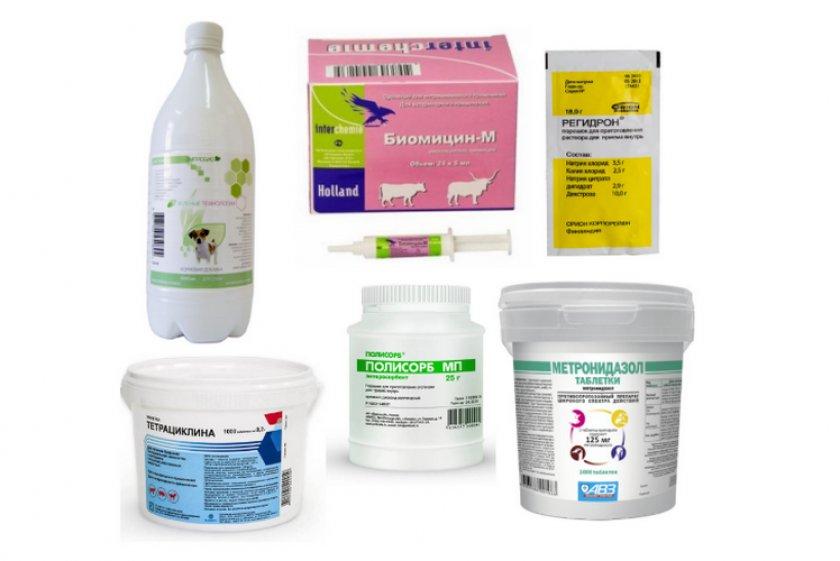 Методы лечения поноса у телят